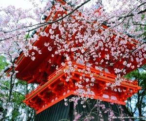 Отдых в Японии интересен каждому